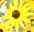 FlowerPlaceHolder1