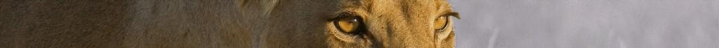 LionBannerCrop1